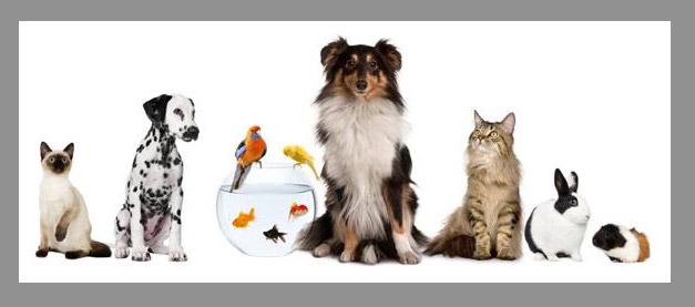 articoli animali domestici ingrosso