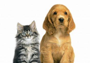 Servizi di vendita mangimi animali domestici